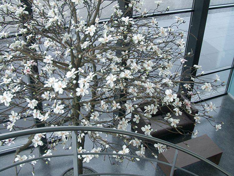 Van Berlo Vloeren : Berlo betonnen vloeren kunst bloesembomen