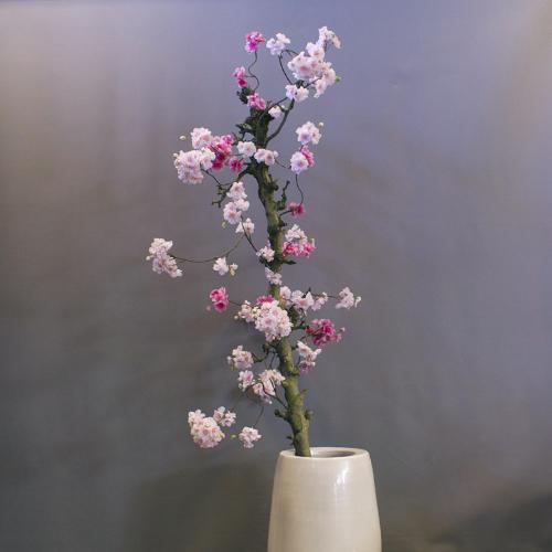 roze kunst bloesemboom