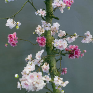 roze kunstbloesemboom