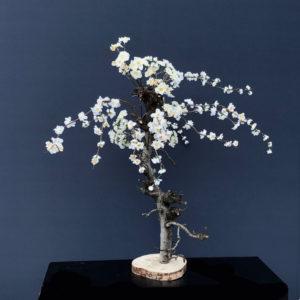 witte kunst prunus