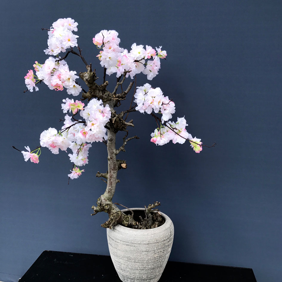 zacht roze bloesem in pot