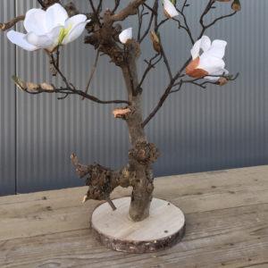 kunst magnolia boom