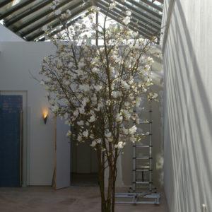 nep magnoliaboom