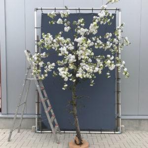 Witte kunst bloesemboom