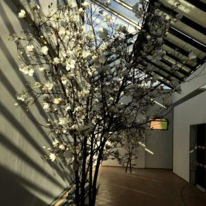kunst magnoliaboom