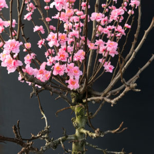 roze kunstprunus