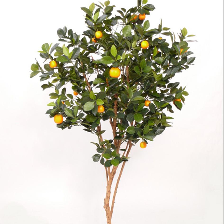 mandarijnboompje
