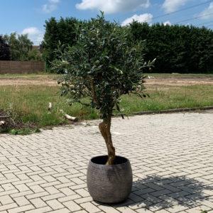 olijfboom artificial