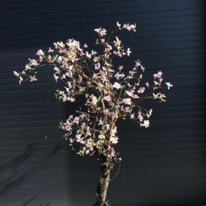 Kunstboom Magnolia
