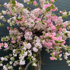kunst bloesemboom 2 kleuren