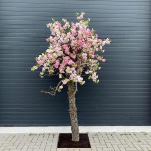 nepbloesemboom 2 kleuren