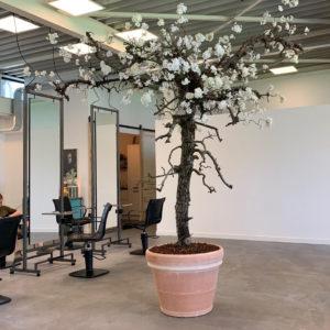 Grote bloesemboom kunst