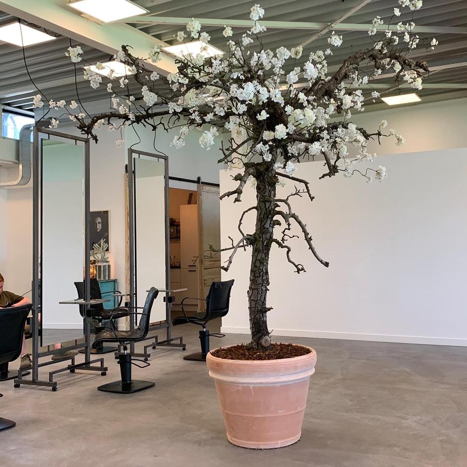 Verrassend Grillige kunst bloesemboom   Kunst bloesembomen HT-96